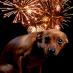 Los perros y el miedo a los fuegos artificiales