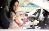 Remedio de Flores de Bach nº 105 Viajar en coche con perros