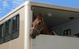 Remedio de Flores de Bach nº 122 Transportar caballos sin estrés