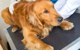 Remedio de Flores de Bach nº 106 Estrés en perros